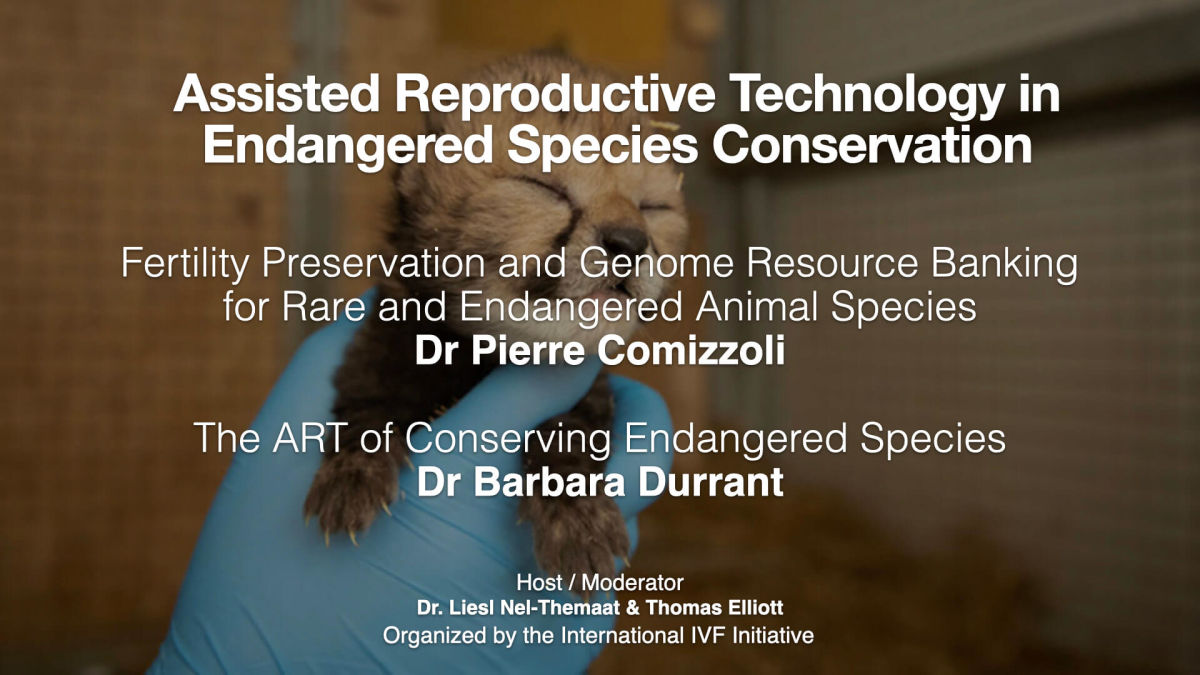 i3 Session 26: Assisted Reproductive Technology in Endangered Species Conservation