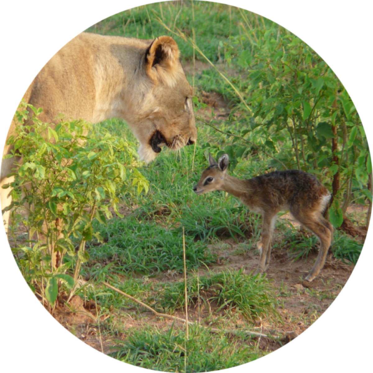 Spermatology as a tool in the conservation of wildlife.